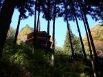安楽寺の国宝八角三重塔