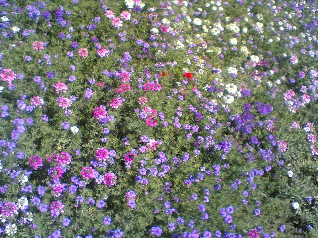 2flowercarpet.jpg