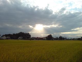 天使の階段と黄金色の稲