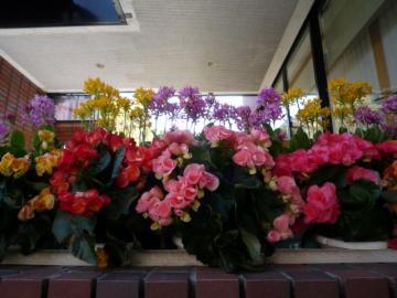 お寺の花 002