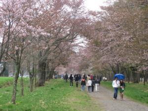 桜のトンネルといわれる場所です