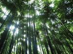 竹林で気持ちすっきり