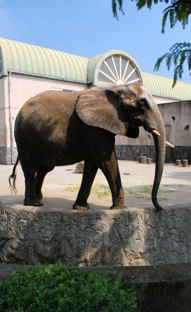 象 横向き