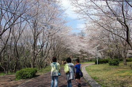 20080328花見3