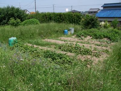 20080614トレイル&花粉症3