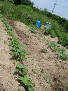 20080614トレイル&花粉症4