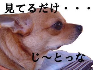 081024_3.jpg