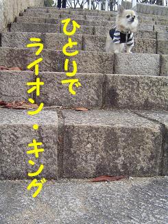 081212_8.jpg