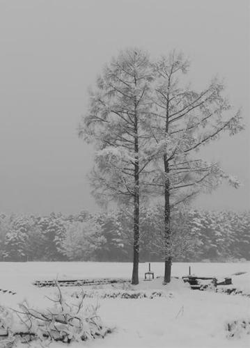 雪景色_R