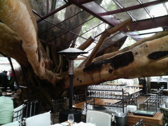 樹のレストラン