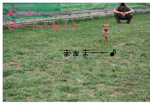 犬!? 1