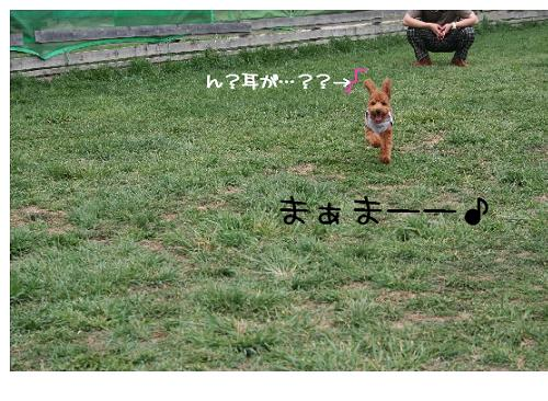 wasabi犬!?2