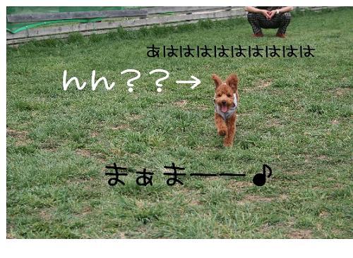 犬!?wasabi3