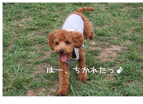 wasabi犬!?5