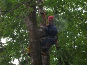 JAA研修会3 樹上でのチェンソー作業