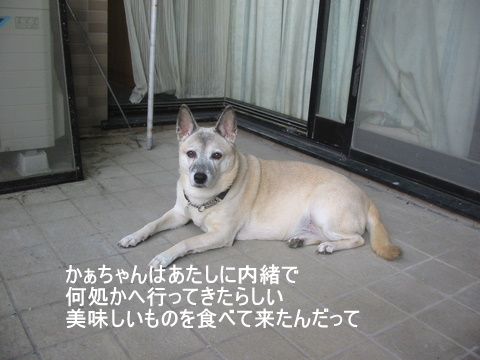 犬たち40071-1