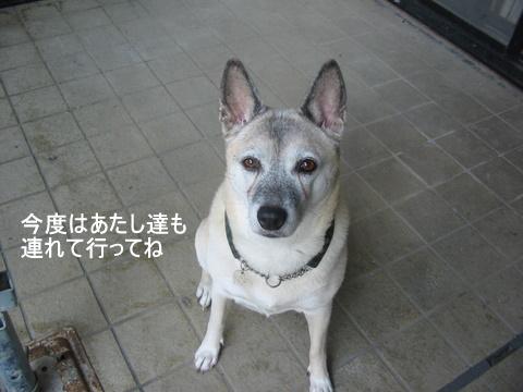 犬たち40081-1