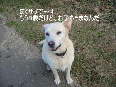 むくちゃん0058-1