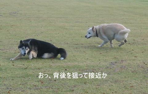 むくちゃん0061