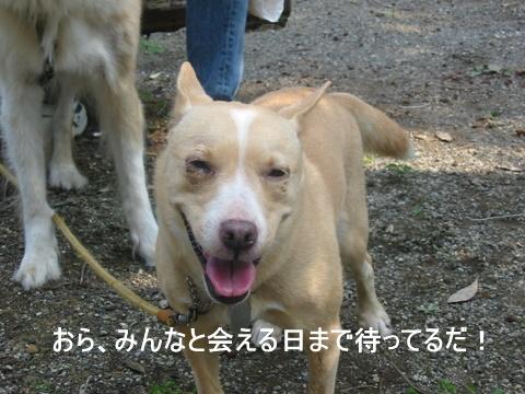 ひばりの森0097-1