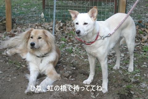 ひばりの森0069-1