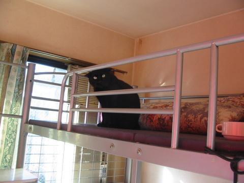猫たち0115