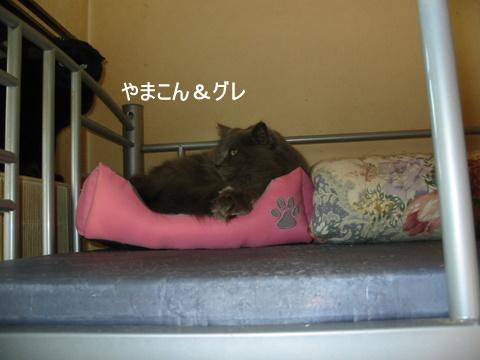 猫たち0145