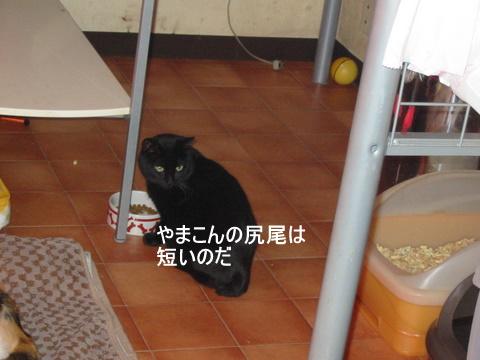 猫たち0135