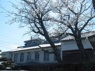 H20.4.3桜b