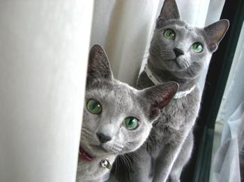 ひょうきん猫1