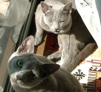 ひょうきん猫オチ