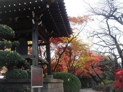 豪徳寺の紅葉  25サイズ