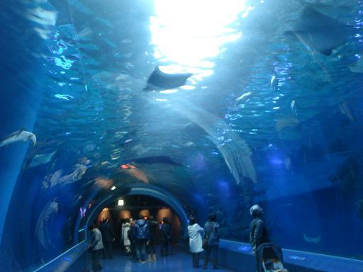 品川水族館 1