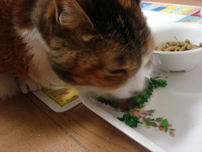 菜の花を夢中で食べるチマサ