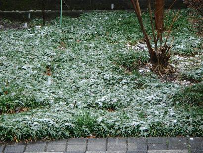 庭の雪 2