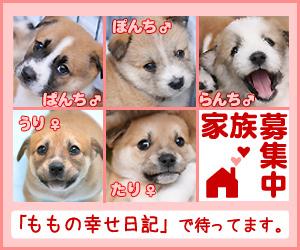5c_bn_l.jpg