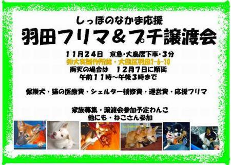 tiwawa_20081121222154.jpg