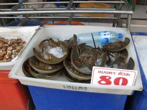 タイのカブトガニ