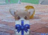 4MiraiさんのApricot プレゼント