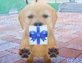 11MiraiさんのCrocus プレゼント