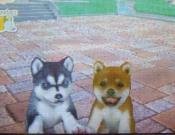 4EmilyとKoiki画像 085