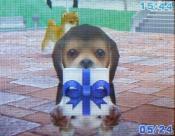 5.6.7.MiraiさんのViola画像 093