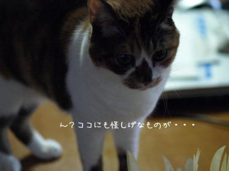 09021007.jpg