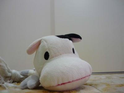 牛さんと一緒に