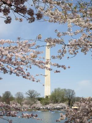 sakura&monument