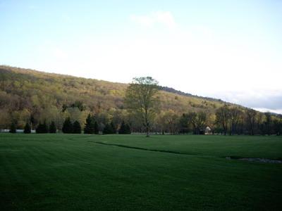 big tree field