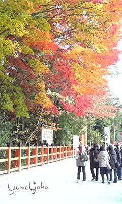 紅葉がきれいでした。