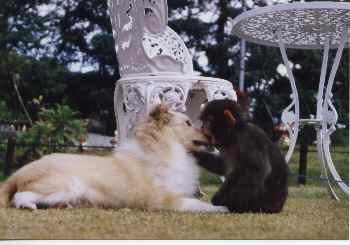 犬猿の仲ですか