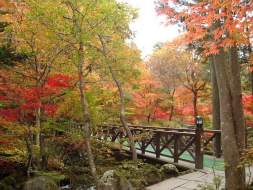 鐘山苑のお庭
