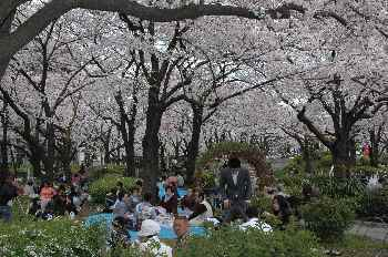 6 穏やかな観桜会